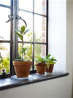 potted plant - Plants on windowsill Stock Photo - Premium Royalty-Freenull, Code: 6106-05810549