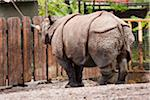 Zoo keeper feeding a Rhino Stock Photo - Premium Royalty-Free, Artist: Minden Pictures, Code: 6106-05810682