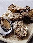 Oysters Stock Photo - Premium Rights-Managed, Artist: Photocuisine, Code: 825-05813037