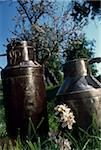 Milk churns in a field Stock Photo - Premium Rights-Managed, Artist: Photocuisine, Code: 825-05813590