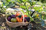 Person holding a basket of vegetables and fruit in the vegetable garden Stock Photo - Premium Rights-Managed, Artist: Photocuisine, Code: 825-05814297