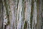 Bark of a tree Stock Photo - Premium Royalty-Free, Artist: Science Faction, Code: 628-05817261