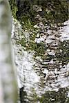 Bark of a tree Stock Photo - Premium Royalty-Free, Artist: Science Faction, Code: 628-05817270