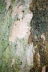 Bark of a tree Stock Photo - Premium Royalty-Free, Artist: Beyond Fotomedia, Code: 628-05817288