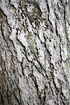 Bark of a tree Stock Photo - Premium Royalty-Free, Artist: Beyond Fotomedia, Code: 628-05817291