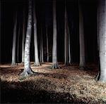 Trees in forest lit up at night Stock Photo - Premium Royalty-Free, Artist: Science Faction, Code: 649-05820040