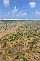Seaweed on Beach, Pipa Beach, Rio Grande do Norte, Brazil Stock Photo - Premium Rights-Managednull, Code: 700-05821823