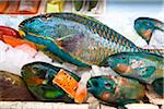 Parrot Fish in Makisha Public Market, Naha, Okinawa, Japan Stock Photo - Premium Rights-Managed, Artist: R. Ian Lloyd, Code: 700-05837430