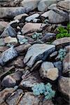 Close-Up of Rocks and Plants, Mushirose, Tokunoshima Island, Kagoshima Prefecture, Japan Stock Photo - Premium Rights-Managed, Artist: R. Ian Lloyd, Code: 700-05837444