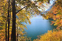 fall trees lake - Lake Koenigssee and Beech Foliage in Autumn, Berchtesgadener Land, Bavaria, Germany Stock Photo - Premium Royalty-Freenull, Code: 600-05837561