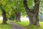 Lime Tree Allee, Marktoberdorf, Ostallgau, Bavaria, Germany Stock Photo - Premium Royalty-Free, Artist: F. Lukasseck, Code: 600-05837565