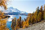 Larch Trees by Lake Sils and Piz de la Margna, Engadin, Switzerland Stock Photo - Premium Royalty-Free, Artist: F. Lukasseck, Code: 600-05837570