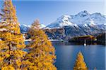 Sail Boat on Lake Sils and Piz de la Margna, Engadin, Switzerland Stock Photo - Premium Royalty-Free, Artist: F. Lukasseck, Code: 600-05837572