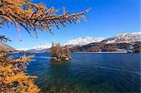 fall trees lake - Larch Trees on Island in Lake Sils with Piz Corvatsch, Engadin, Switzerland Stock Photo - Premium Royalty-Freenull, Code: 600-05837579