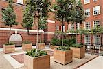 Upper level of red brick courtyard in London's Mayfair district. Iroko wood planters with single-stemmed evergreen trees and perennial plants set on gravel surface between york stone and red brick paving. Designed by Modular. Stock Photo - Premium Rights-Managed, Artist: Arcaid, Code: 845-05838295