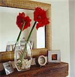 Red Amaryllis flower in glass vase on mantelpiece Stock Photo - Premium Rights-Managed, Artist: Arcaid, Code: 845-05838944