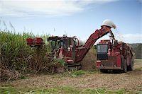 queensland - Harvesting sugar cane, Mossman, Port Douglas, Queensland, Australia, Pacific Stock Photo - Premium Rights-Managednull, Code: 841-05846109