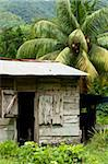 Farmer's home on a pineapple farm, White River, Delices, Dominica, Windward Islands, West Indies, Caribbean, Central America Stock Photo - Premium Rights-Managed, Artist: Robert Harding Images, Code: 841-05847655