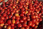 Roma Tomatoes, Cawston, Similkameen Country, British Columbia, Canada Stock Photo - Premium Royalty-Free, Artist: Michael Mahovlich, Code: 600-05855137