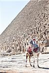 Man on Camel in front of Great Pyramid of Giza, Cairo, Egypt Stock Photo - Premium Rights-Managed, Artist: Ikonica, Code: 700-05855187