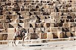 Man on Camel in front of Great Pyramid of Giza, Cairo, Egypt Stock Photo - Premium Rights-Managed, Artist: Ikonica, Code: 700-05855193