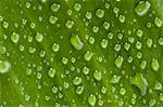 Waterdrops on a leaf, close-up Stock Photo - Premium Royalty-Free, Artist: photo division, Code: 6108-05857248