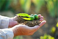 sprout - Close-up of a man's hand holding a seedling Stock Photo - Premium Royalty-Freenull, Code: 6108-05870488