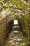 Narrow path passing through a tunnel Stock Photo - Premium Royalty-Free, Artist: Mark Peter Drolet, Code: 6108-05870713