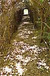 Narrow path passing through a tunnel Stock Photo - Premium Royalty-Free, Artist: CulturaRM, Code: 6108-05875056