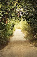 green alley with rural footpath Stock Photo - Royalty-Freenull, Code: 400-05876901