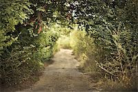 green alley with rural footpath Stock Photo - Royalty-Freenull, Code: 400-05878289