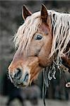 A beautiful horse in the countryside Stock Photo - Royalty-Free, Artist: goinyk                        , Code: 400-05878299