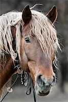 A beautiful horse in the countryside Stock Photo - Royalty-Freenull, Code: 400-05878300