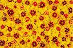 Rudbeckia laciniata, Lantana camara, Tagetes - flower heads