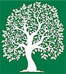 White tree on green background 2 - vector illustration. Stock Photo - Royalty-Free, Artist: clairev                       , Code: 400-05885723