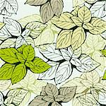Background from basil leafs green and beige vector