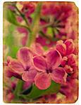 Blooming flowers of lilac. Old postcard. design in grunge and retro style Stock Photo - Royalty-Free, Artist: aelita                        , Code: 400-05892139