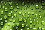 Beautiful water drops on a leaf close-up Stock Photo - Royalty-Free, Artist: haveseen                      , Code: 400-05897462