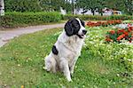 dog on herb Stock Photo - Royalty-Free, Artist: basel101658                   , Code: 400-05901232