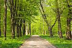 wide road which passes in the woods Stock Photo - Royalty-Free, Artist: vrvalerian                    , Code: 400-05903301