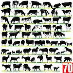 Dairy Cattle Silhouettes Set Stock Photo - Royalty-Free, Artist: kaludov                       , Code: 400-05903934