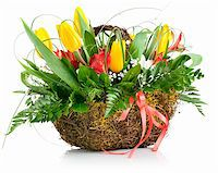 basket of yellow tulip flowers isolated on white background Stock Photo - Royalty-Freenull, Code: 400-05906225