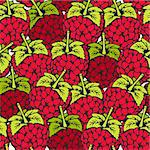 Raspberry seamless pattern Stock Photo - Royalty-Free, Artist: fandorina                     , Code: 400-05910622