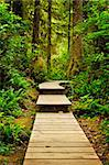 Wooden path through temperate rain forest. Pacific Rim National Park, British Columbia Canada Stock Photo - Royalty-Free, Artist: Elenathewise                  , Code: 400-05910838