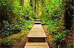 Wooden path through temperate rain forest. Pacific Rim National Park, British Columbia Canada Stock Photo - Royalty-Free, Artist: Elenathewise                  , Code: 400-05910839