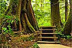 Path through temperate rain forest. Pacific Rim National Park, British Columbia Canada Stock Photo - Royalty-Free, Artist: Elenathewise                  , Code: 400-05910841