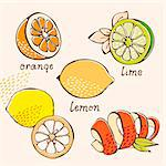 Citrus vector set from orange, lemon, lime, grapefruit in cartoon style Stock Photo - Royalty-Free, Artist: fandorina                     , Code: 400-05910931