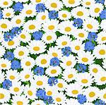 Seamless pattern with camomiles and cornflower background Stock Photo - Royalty-Free, Artist: 100ker                        , Code: 400-05914811