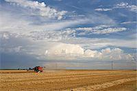 Wheat Field at Harvest, Lethbridge, Alberta, Canada Stock Photo - Premium Rights-Managednull, Code: 700-05948111