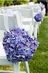 Hydrangeas on Chairs at Wedding Ceremony, Toronto, Ontario, Canada Stock Photo - Premium Royalty-Free, Artist: Ikonica, Code: 600-05948269